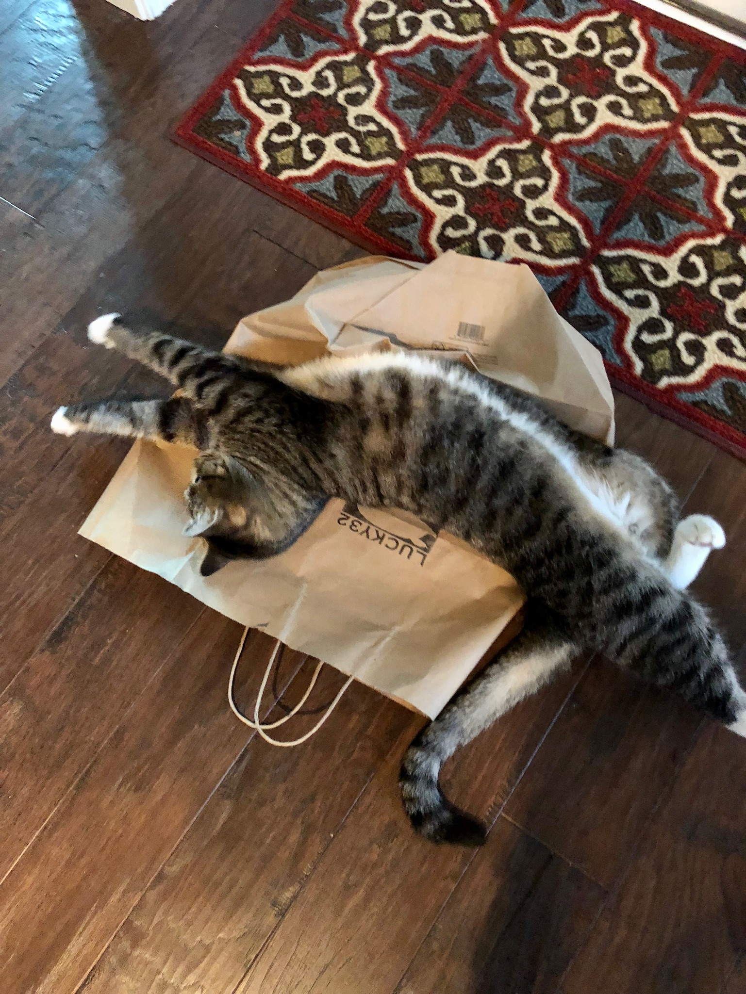 Haku stretched out on a crushed paper bag