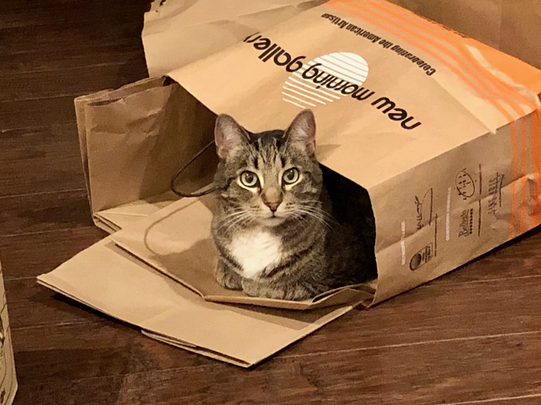Haku sitting comfortably in a paper bag