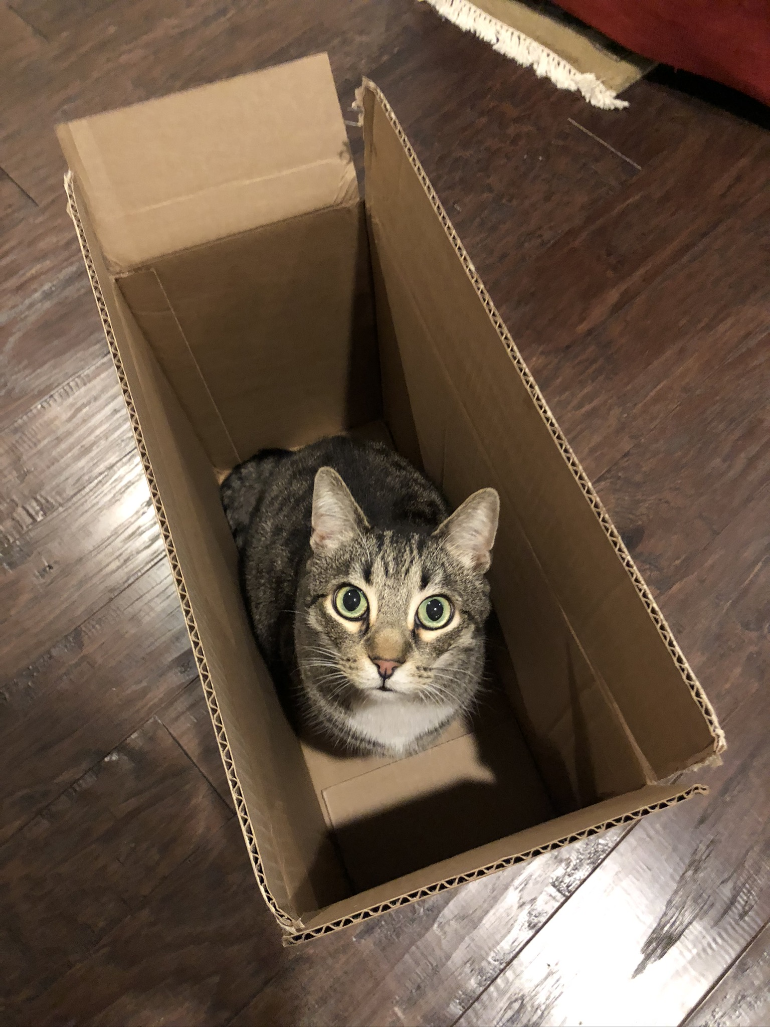 Haku in a box