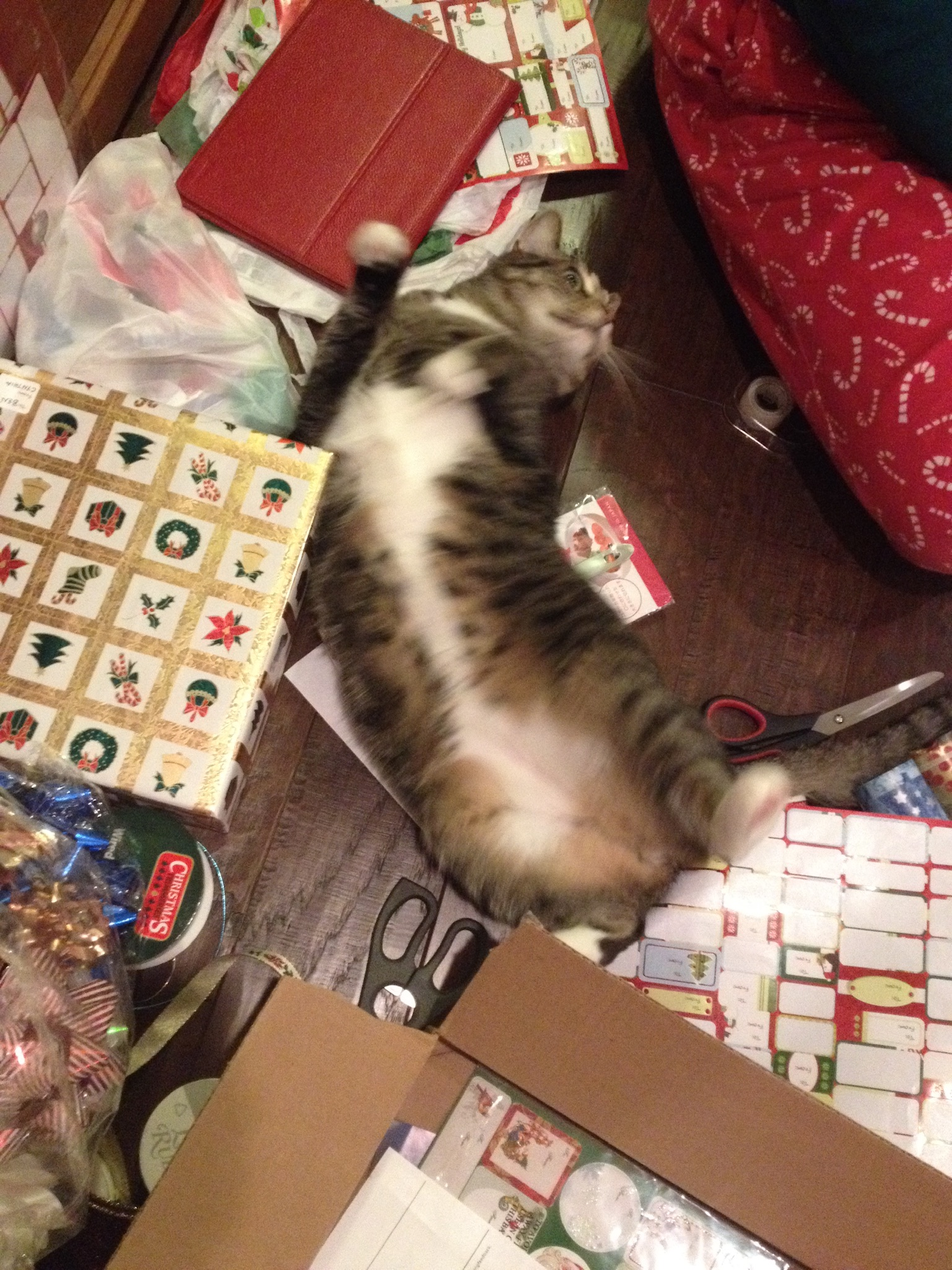 helping us wrap presents